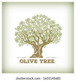 Olive tree design. Vintage background