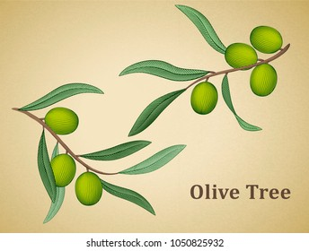 Olive tree leaves, natural design elements in engraving style