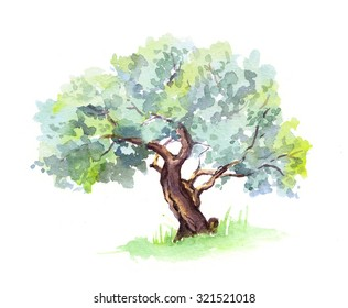 Olive tree. Watercolor