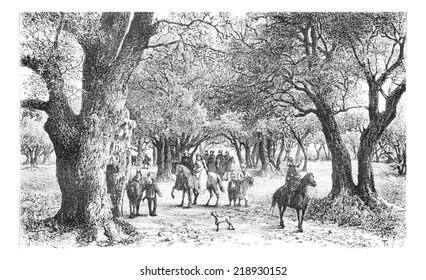 Olive Trees of Nablus in West Bank, Israel, vintage engraved illustration. Le Tour du Monde, Travel Journal, 1881