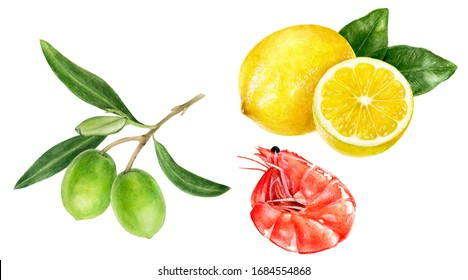 Olives branch shrimp lemon watercolor isolated on white background