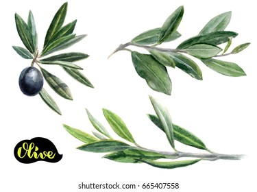 Olives watercolor illustration. Olive branches set with olives isolated on a white background.