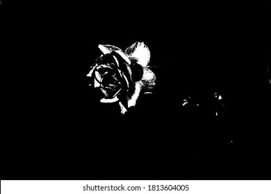 Ominous black rose on a black background. Horrible picture for Halloween.