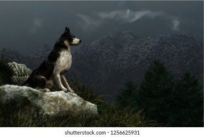 On a dark wintry day, a wolf sits on a rock atop a grassy hill that overlooks a Rocky Mountain valley filled with fir trees. 3D Rendering