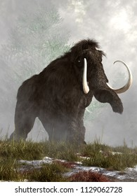 On a misty morning, a grey woolly mammoth trudges through the snow and grass. He looks a bit annoyed that you are in his way. This massive animal is an extinct creature of the ice age. 3D Rendering