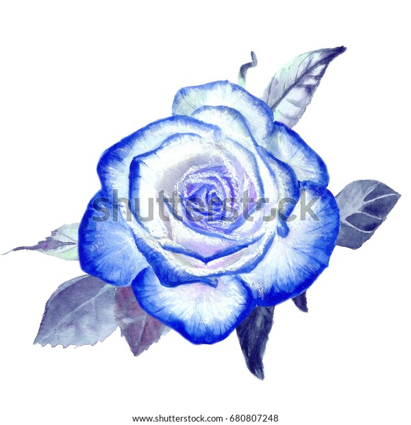One Blue Rose Watercolor Painting Flower Stock Illustration 680807248