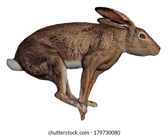 One brown hare running in white background
