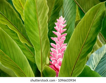 One ginger blossom with leaves