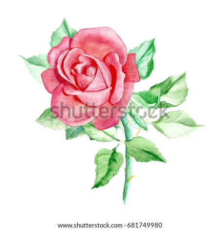 One Pink Rose Watercolor Painting Wedding Stock Illustration