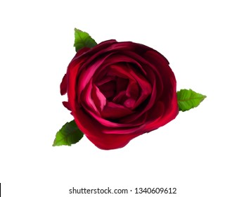 One red rose illustration isolated on a white background.