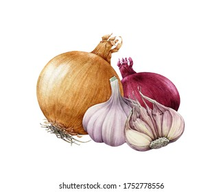Onion golden and red bulb with garlic watercolor illustration. Realistic vegetable roots hand drawn image. Organic fresh onion and garlic close up group. Natural vegan raw bulbs on white background.