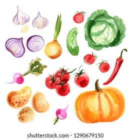 Onions, red onions, garlic, pumpkin, cabbage, chili peppers, tomatoes, cherry tomatoes, potatoes, radishes, cucumbers painted with watercolor on a white background. A colored sketch of vegetables. Far