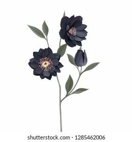 Onyx odyssey flower illustration
