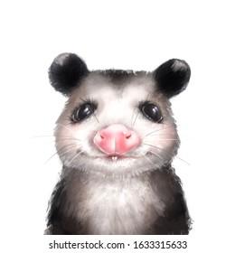 Opossum portrait on white. Cute animal illustration