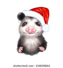 Opossum in Santa Hat. Cute animal portrait isolated on white