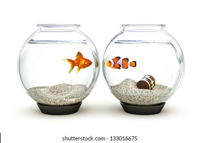 Opposites Attract, goldfish and clown fish showing curiosity,concept