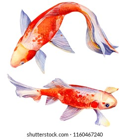 orange carp, beautiful fish on isolated white background, watercolor illustration, hand drawing