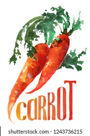 Orange carrot. Hand drawing watercolor on white background with title. Watercolor title, lettering