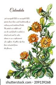 Orange flowers painting. Calendula