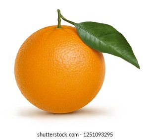 Orange fruit illustration, digital painting