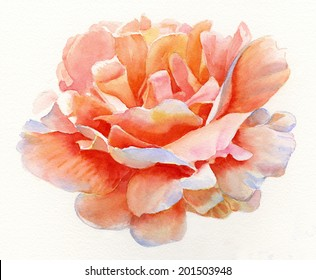 Orange and Gold Rose Blossom 2.  Watercolor painting of a rose blossom with colors of orange, gold and pink.