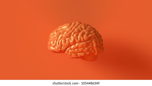 Orange Human brain Anatomical Model 3d illustration