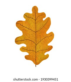 Orange oak leaf fallen from the tree. Plant, nature, autumn. Digital illustration isolated on a white background.