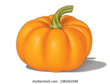 orange pumpkin color full illustration