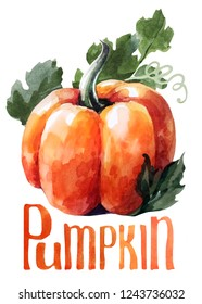 Orange pumpkin. Hand drawing watercolor on white background with title. Watercolor title, lettering