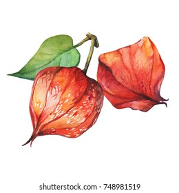 Orange, red dry physalis fruit berry (winter cherry, Cape gooseberry). Watercolor hand drawn painting illustration isolated on white background.