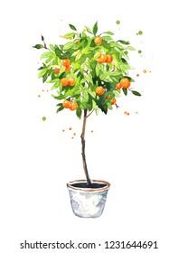 Orange tree, watercolor sketch