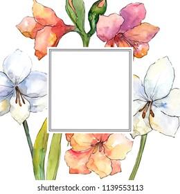 Orange and white amaryllis. Floral botanical flower. Frame border ornament square. Aquarelle wildflower for background, texture, wrapper pattern, frame or border.