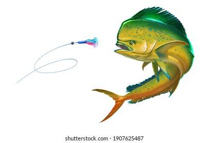 Orange - Yellow мahi mahi or dolphin fish attacks bait sea swim squids skirt. Realistic illustration of mahi-mahi or dolphin fish on white background isolate.