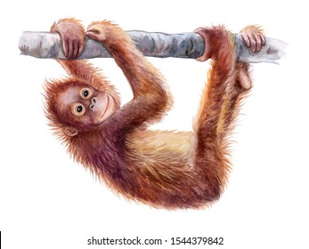 Orangutan baby. Realistic red cheerful monkey on tree colorful isolated on white background. Watercolor. Illustration. Template. Close-up. Clip art. Hand drawn. Painting. Hand drawing