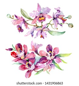 Orchid bouquets floral botanical flowers. Wild spring leaf wildflower isolated. Watercolor background set. Watercolour drawing fashion aquarelle. Isolated bouquet illustration element.