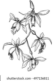 Orchid flowers on branch blossom. Botanical retro vintage hand drawn watercolor black and white monochrome wedding illustration for invitation, print, textile, design. Japanese style. Tropical, exotic