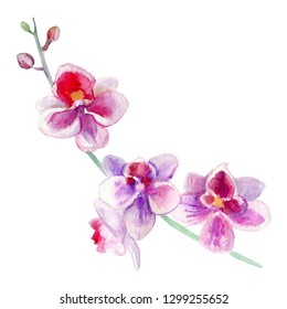 Orchid flowers watercolor hand drawn botanical illustration isolated on white background, decorative branch for design pattern, package cosmetic, greeting card, wedding invitation, beauty salon