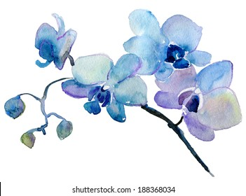 orchid isolated on white background. watercolor painting