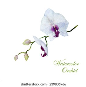 orchid, watercolor, flowers