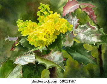 Oregon Grape Blossoms with Leaves.  Watercolor painting of yellow wild flowers with shiny leaves