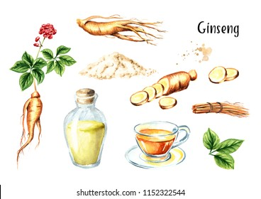 Organic fresh ginseng set. Root, leaf, flower, tea, tincture. Watercolor hand drawn illustration, isolated on white background