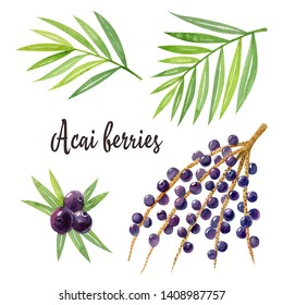 Organic superfood acai with green leaves, berries and acai branch isolated on white background. Watercolor hand drawn illustration.