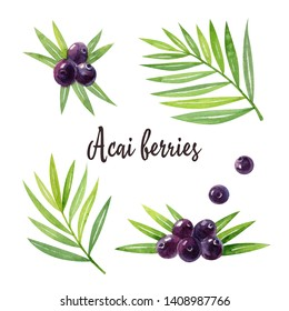 Organic superfood acai with green leaves and acai berries isolated on white background. Watercolor hand drawn illustration.