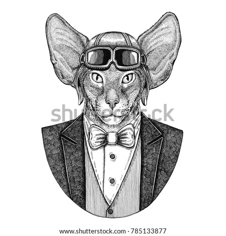 5b79a9249 Oriental cat with big ears Animal wearing aviator helmet and jacket with bow  tie Flying club Hand drawn illustration for tattoo