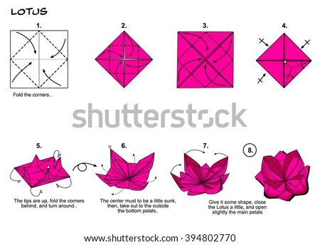 Origami Traditional Flower Lotus Diagram Instructions Stock