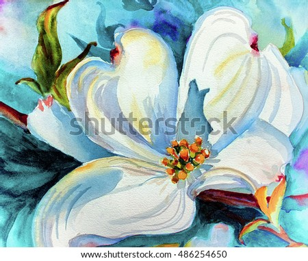 Original Art Watercolor Painting Dogwood Blossom Stock Illustration