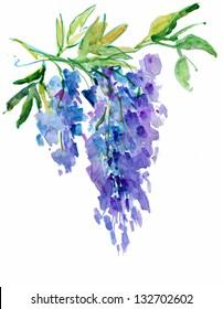 original art, watercolor of wisteria blooms
