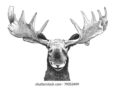 original black and white hand drawn pen art illustrated animal sketch of funny wild moose head with antlers, ear face eyes and nose isolated on white background for fun happy Christmas card humor