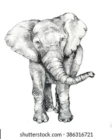 Original Hand Drawn Elephant Sketch in Pencil