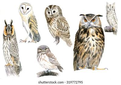 Original owls portrait watercolor, hand painted